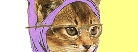 Hipster Kitty Hates The Census
