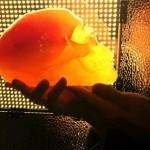 Flaming-Lips-Gummy-Skull