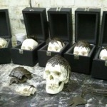 doing-cool-stuff-with-real-human-skulls