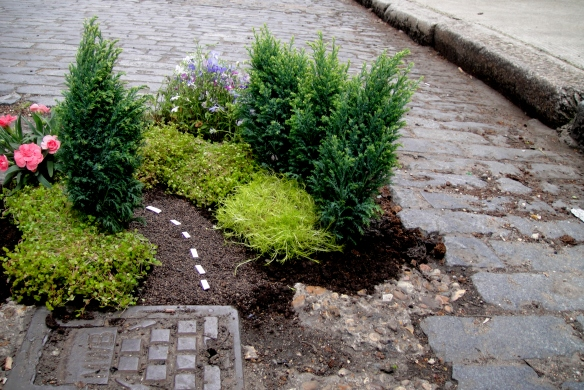 Steve Wheen Is Planting Gardens In Potholes