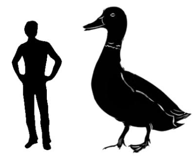 big-duck