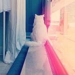 manon wethly cat