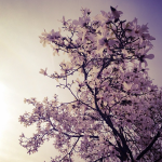manon wethly tree